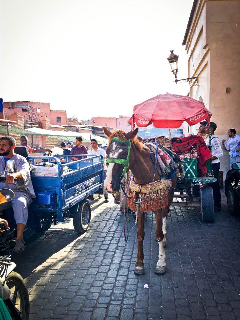 travel-morocco-marrakech